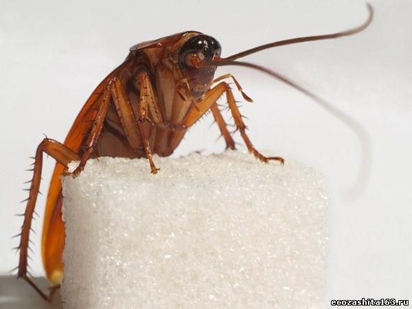 Борьба с тараканами – не проблема мы
